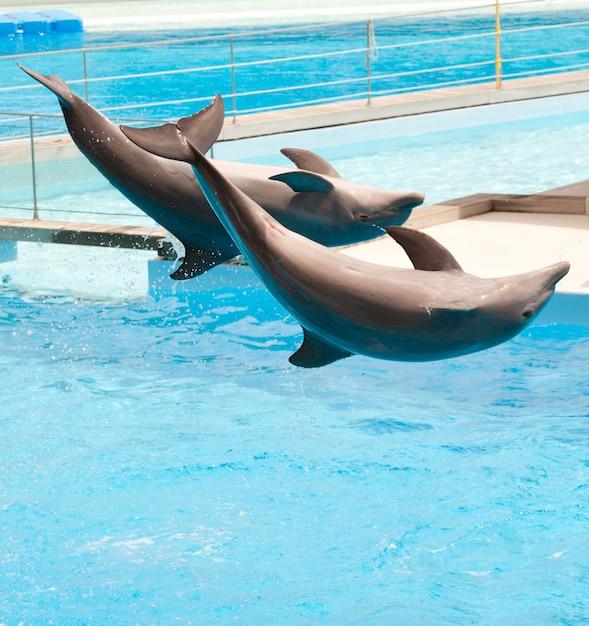 Deux dauphins Photo Premium