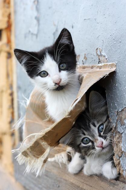 Deux drôles chaton enjoué sans abri Photo Premium