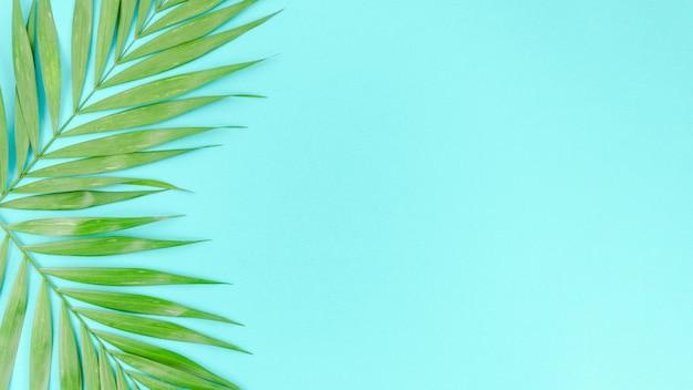 Deux feuilles de palmier vert sur la table Photo gratuit