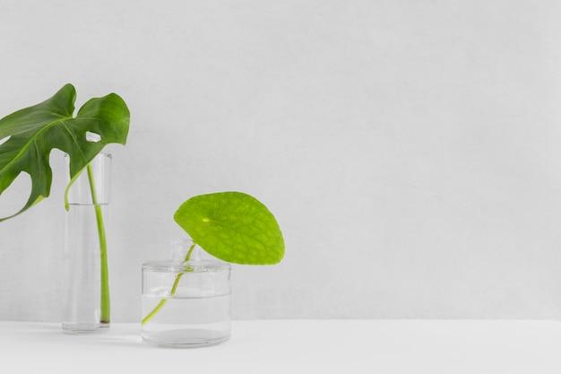 Deux feuilles vertes dans le vase en verre différent avec de l'eau en toile de fond Photo gratuit