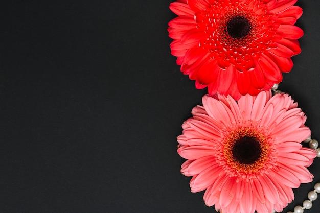 Deux fleurs de gerbera lumineuses sur un tableau noir Photo gratuit