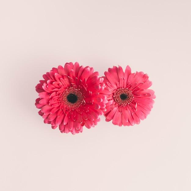 Deux fleurs de gerbera rose sur une table lumineuse Photo gratuit