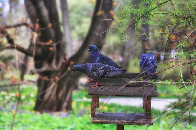 Deux pigeons assis sur une mangeoire à oiseaux dans le parc Photo Premium