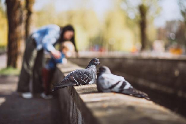 Deux piggeons assis sur une clôture de pierre dans le parc Photo gratuit