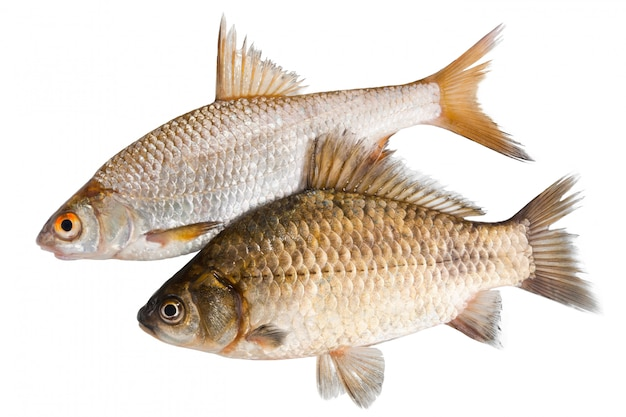 Deux poissons crus isolés Photo Premium
