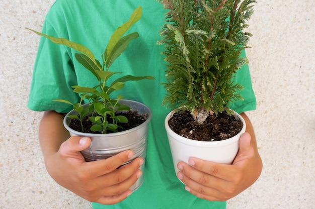 Deux pots verts Photo Premium