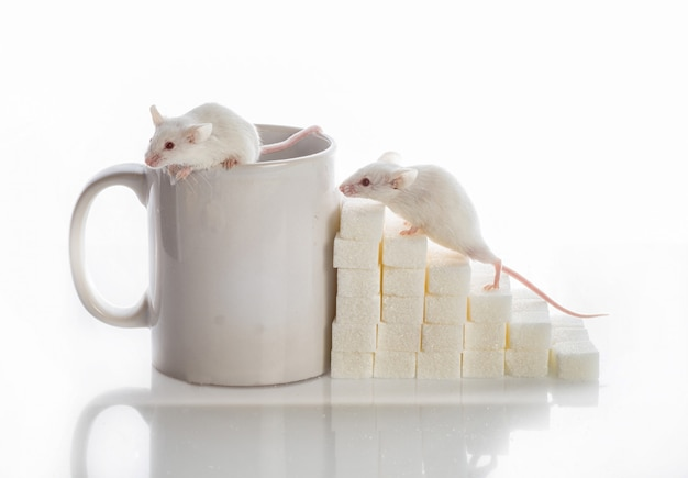 Deux souris blanches rampant dans les escaliers des cubes de sucre et une tasse Photo Premium