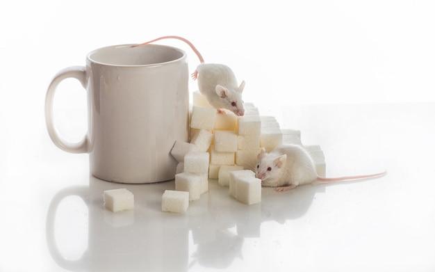 Deux souris blanches rampant dans les escaliers depuis les cubes de sucre et une tasse, concept de diabète Photo Premium
