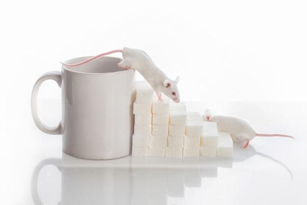 Deux souris blanches rampant dans les escaliers depuis les morceaux de sucre et une tasse, concept de diabète Photo Premium