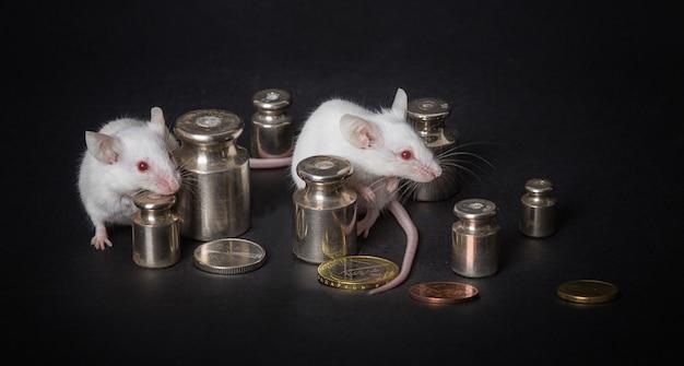 Deux souris de laboratoire blanches avec des poids et des pièces de monnaie sur un fond gris. le concept d'activité économique Photo Premium