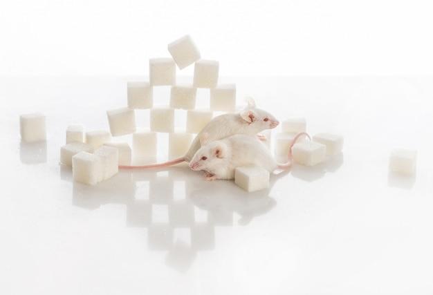 Deux souris de laboratoire blanches près de la pyramide de sucre, concept de diabète Photo Premium