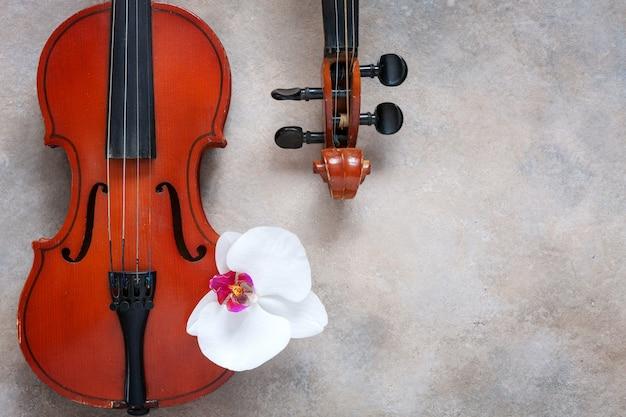 Deux vieux violons et fleur d'orchidée blanche. vue de dessus, gros plan sur fond de béton clair Photo Premium