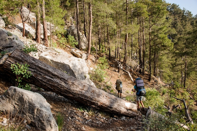 Deux voyageurs avec des sacs à dos en randonnée dans les bois Photo Premium