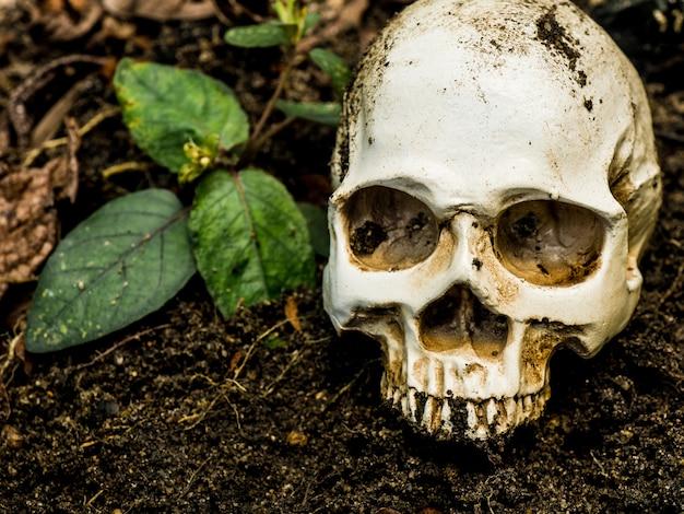 Devant le crâne humain enfoui dans le sol. le crâne a la saleté attachée au crâne. Photo Premium