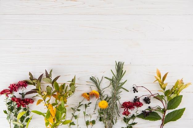 Différentes branches de plantes avec des fleurs sur la table Photo gratuit