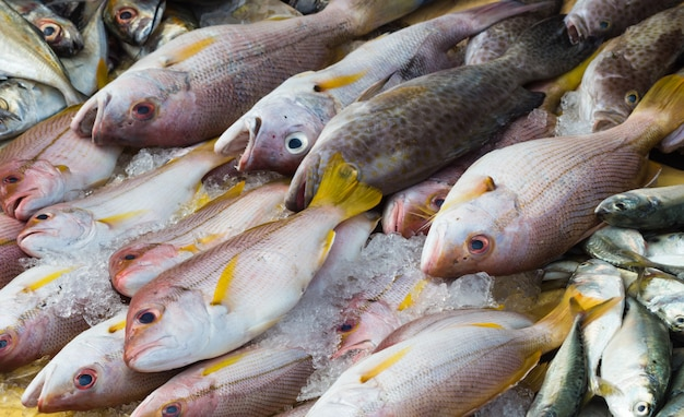 Différents types de poissons sur la glace Photo Premium
