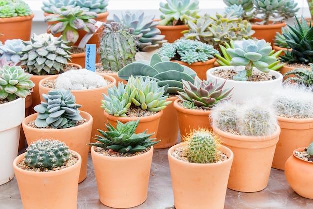 Différents types de succulentes dans des pots de fleurs dans la serre Photo Premium