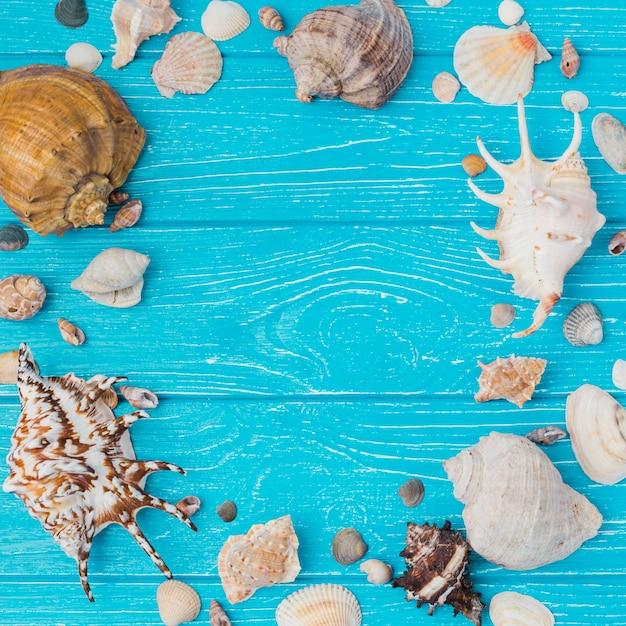 Disposition des coquillages à bord Photo gratuit