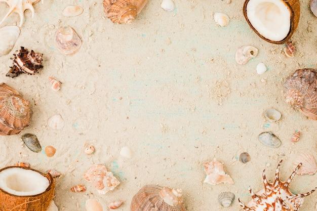 Disposition De Coquillages Et De Noix De Coco Sur Le Sable Photo gratuit
