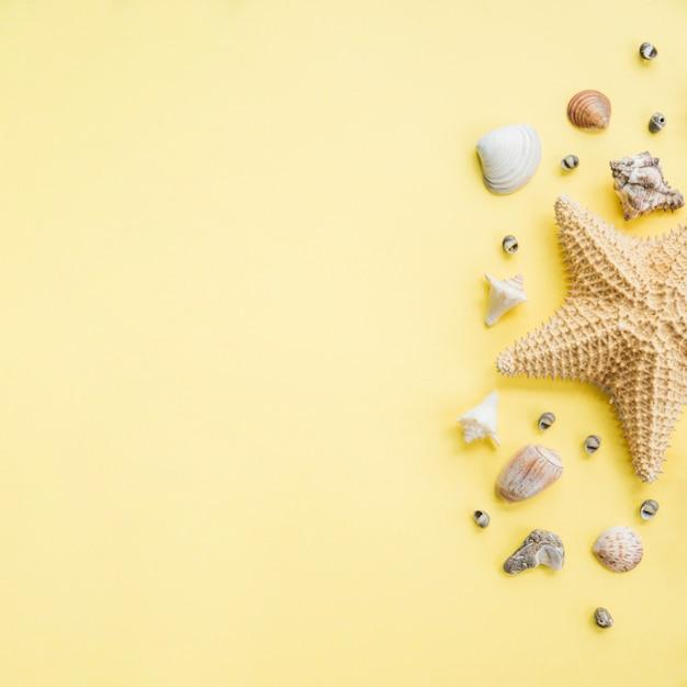 Disposition de grandes étoiles de mer près des coquillages Photo gratuit