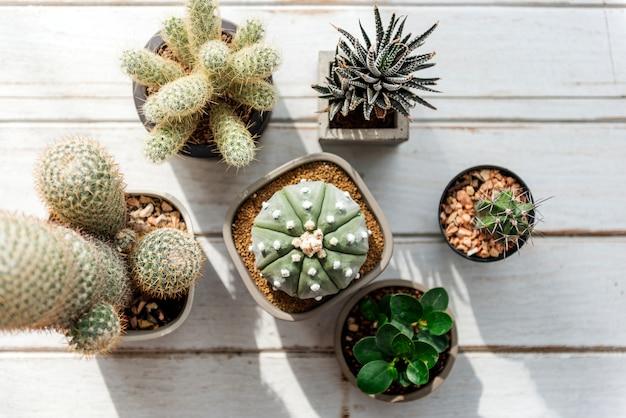 Divers petits cactus Photo gratuit