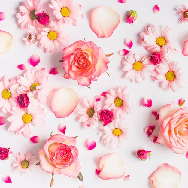 Diverses fleurs et pétales Photo gratuit