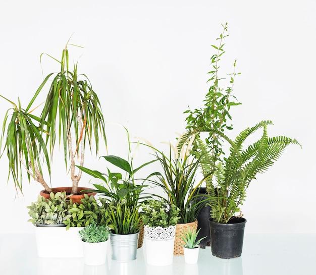 Diverses plantes en pot disposées sur un bureau réfléchissant Photo gratuit