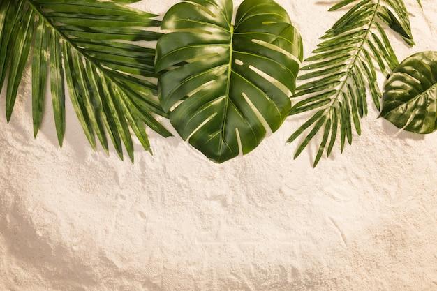 Diverses plantes sur le sable Photo gratuit