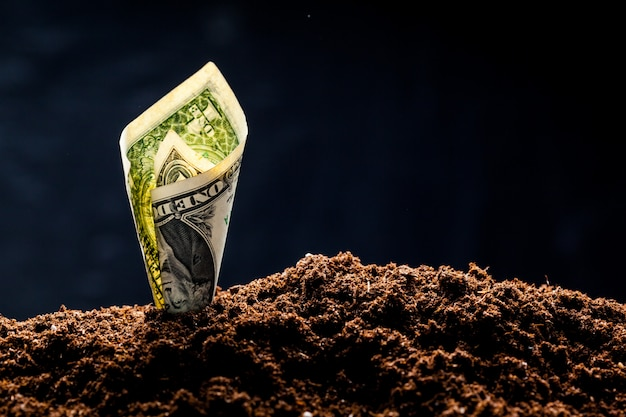 Les dollars américains poussent du sol Photo Premium