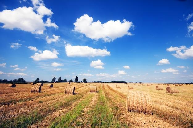 Domaine Agricole Photo gratuit
