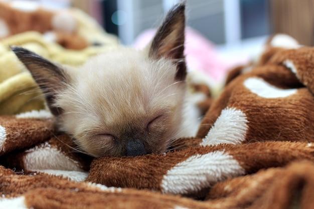 Dormir des petits chatons dans la chambre Photo Premium