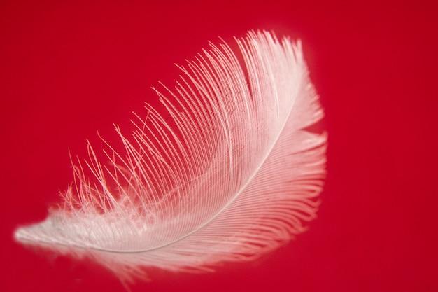 Douce plume d'air blanc sur un beau fond doux Photo Premium