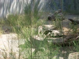 Dragon de komodo au zoo de surabaya Photo gratuit