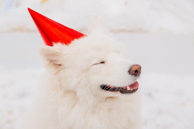 Drôle chien blanc avec des yeux fermés au bonnet rouge assis sur la neige dans la forêt Photo Premium
