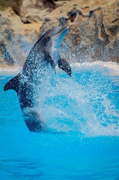 Drôle de dauphin sautant lors d'un spectacle au zoo Photo Premium