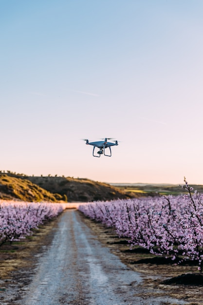 Dron survolant le champ de fleurs Photo Premium