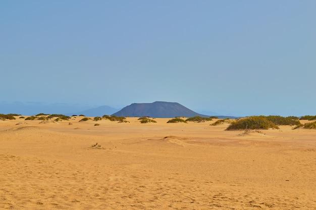 Dunes de corralejo avec végétation et pas Photo Premium