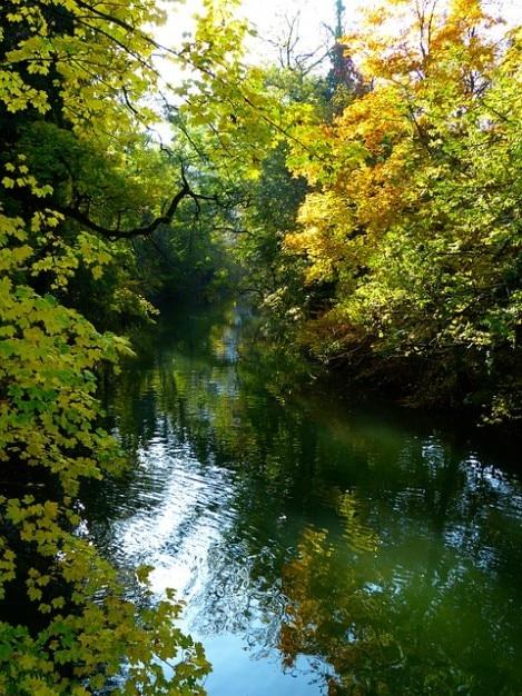 L'eau bancaire automne humeur arbre danube Photo gratuit