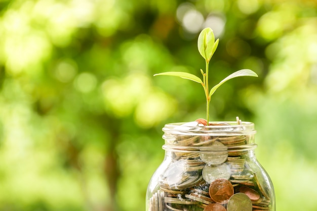Économiser de l'argent pour le concept d'investissement. plante grandissant de pièces Photo Premium