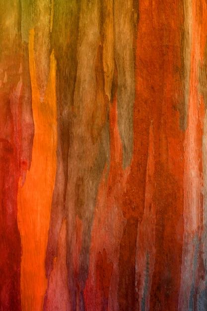 Écorce d'arbre d'eucalyptus Photo Premium