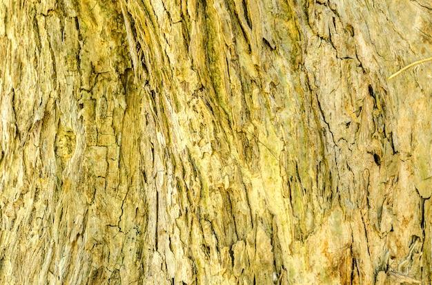 Écorce d'arbre fond et texture Photo Premium