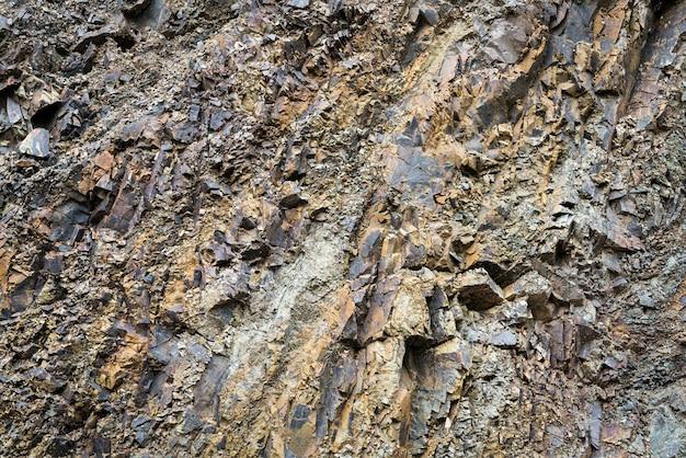 L'écorce des arbres close up Photo gratuit