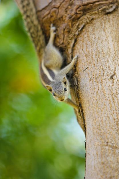 Écureuil sur arbre Photo Premium