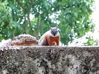 Écureuil, le printemps Photo gratuit