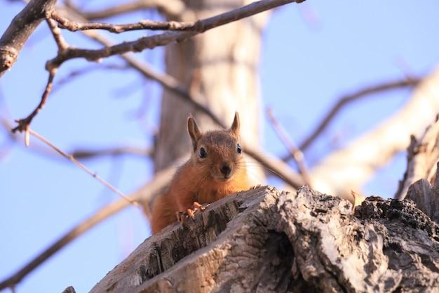 Écureuil Sauvage Sur Une Branche D'arbre Photo gratuit