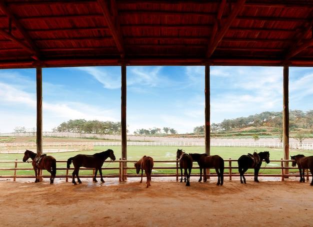 Écuries et chevaux Photo Premium
