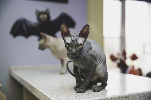 Effrayant Jeune Chat Noir Don Sphynx Avec Chauve-souris En Papier Noir Photo Premium