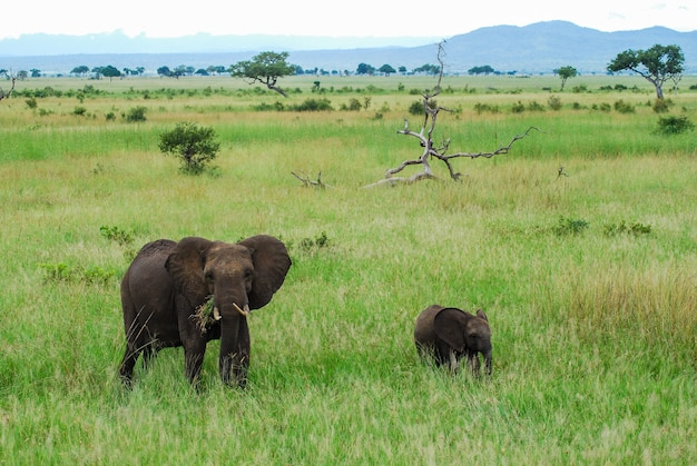 Un éléphant et un bébé Photo Premium