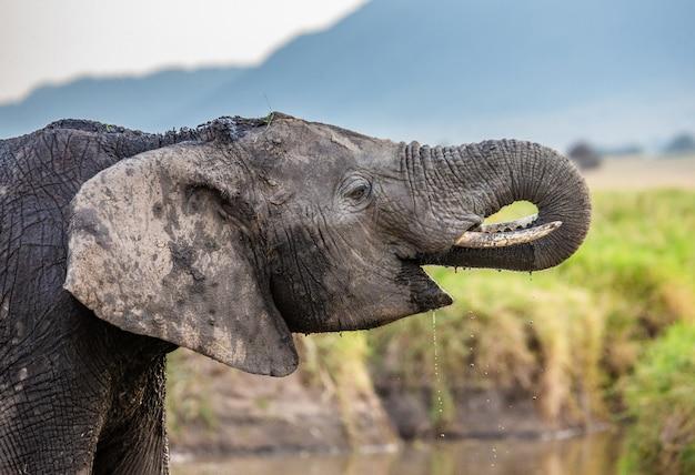 L'éléphant Boit De L'eau Dans La Savane. Photo Premium