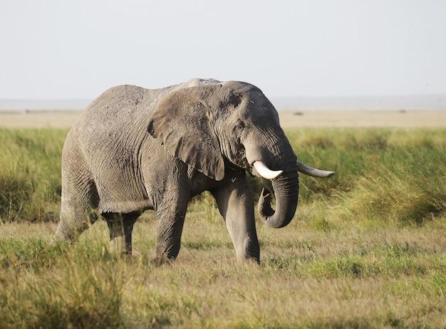 Éléphant Dans Le Parc National D'amboseli, Kenya, Afrique Photo gratuit